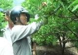 Hội Nông dân TP.Tân An: Tham quan, học tập kinh nghiệm tại Tây Ninh.