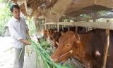 Nhơn Hòa Lập phát triển nông nghiệp theo hướng bền vững