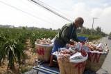 Ứng dụng công nghệ cao trong sản xuất nông nghiệp - Nỗ lực thực hiện với quyết tâm cao
