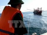 Khẩn trương tìm kiếm 3 thuyền viên mất tích ở vùng đảo Bạch Long