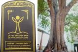 Cụm 10 cây me trong khuôn viên Chùa Rạch Núi được công nhận Cây di sản Việt Nam