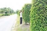 Vì môi trường nông thôn xanh, sạch, đẹp