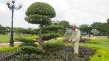 TP.Tân An: Nỗ lực xây dựng đô thị xanh, sạch, đẹp, văn minh