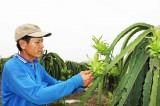 Chuyển đổi cơ cấu cây trồng: Quy hoạch chưa kịp phát triển