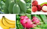 Xuất khẩu rau quả tiếp tục tăng mạnh, giá trị vượt 3 tỉ USD