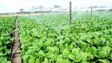 Hội thảo lựa chọn và ứng dụng hiệu quả công nghệ cao trong sản xuất nông nghiệp