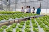 Tham quan mô hình trồng rau