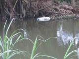 Vứt xác động vật chết xuống kênh là vi phạm pháp luật