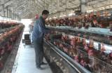 Cần Giuộc hơn 10.000 nông dân sản xuất, kinh doanh giỏi