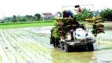 Cần Đước: Sản xuất nông nghiệp ứng dụng công nghệ cao đạt kết quả bước đầu