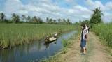 Phát triển bền vững ĐBSCL ưu tiên thủy sản, cây ăn trái và lúa