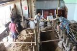 Triều cường đánh sập 10 nhà chồ ở Nha Trang