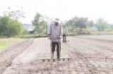Đức Hòa: Xuống giống hơn 400ha đậu phộng vụ Đông Xuân