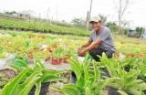 Nông dân Cần Giuộc trồng hoa phục vụ Tết Nguyên đán 2018
