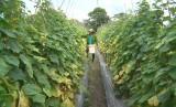 Đức Hòa: Hiệu quả từ phong trào Nông dân sản xuất, kinh doanh giỏi