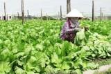 Năm 2018, đẩy mạnh tái cơ cấu ngành nông nghiệp