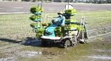 Phát triển nông nghiệp ứng dụng công nghệ cao còn nhiều khó khăn