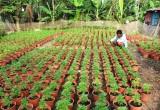 Nông dân thêm thu nhập nhờ trồng hoa tết