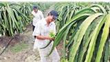 Phát triển nông nghiệp công nghệ cao - hướng đi bền vững