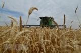 FAO: Giá lương thực trên toàn cầu ổn định trong tháng Một