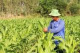 Hưng Điền B: Đường đến nông thôn mới không xa