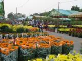 Sôi động chợ hoa ngày giáp tết