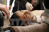 Ông Assad chỉ trích cáo buộc của phương Tây về tấn công hóa học