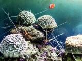Quy chế phối hợp quản lý nghiên cứu khoa học trong vùng biển Việt Nam