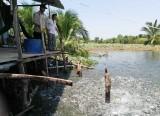 Bình Phong Thạnh nâng cao thu nhập cho người dân