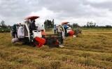 ĐBSCL: Liên kết sản xuất để ổn định đầu ra cho nông sản