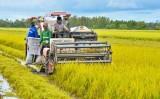 Liên kết sản xuất, nông dân không còn nỗi lo bị ép giá