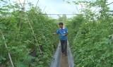 Sản xuất rau ứng dụng công nghệ cao, nâng giá trị nông sản