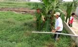 Cơ sở giết mổ xả nước thải chưa xử lý ra ruộng
