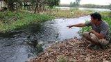 Nuôi cá xả nước thải trực tiếp ra kênh gây ô nhiễm môi trường