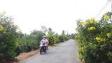 """Tuyến đường hoa """"xanh, sạch, đẹp"""" ở xã An Lục Long"""