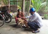 Cần Giuộc thực hiện cao điểm tiêm phòng bệnh dại ở chó, mèo