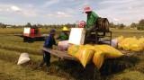 Tân Hưng: Ứng dụng công nghệ cao trong sản xuất lúa bước đầu hiệu quả