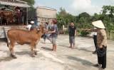 Đức Hòa trao tặng 50 con bò giống cho hộ cận nghèo, gia đình chính sách khó khăn