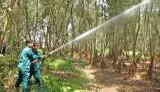Khu Bảo tồn Đất ngập nước Láng Sen: Chủ động phòng cháy, chữa cháy rừng