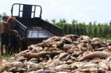 Bình Phước: Gần 20 tấn cá chết trắng tại đập Bình Hà 1