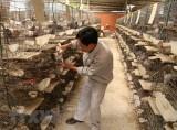 Thủ tướng phê duyệt đề án phát triển 15.000 hợp tác xã nông nghiệp
