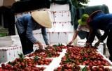 Kỳ tích xuất khẩu rau quả vượt dầu thô: Còn nhiều việc phải làm