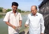 Giá tôm giảm mạnh, dịch bệnh phát sinh, nông dân gặp khó
