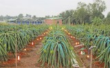 Vĩnh Công: Tập trung phát triển sản xuất, nâng cao thu nhập người dân
