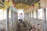Đồng hành với người chăn nuôi theo hướng an toàn