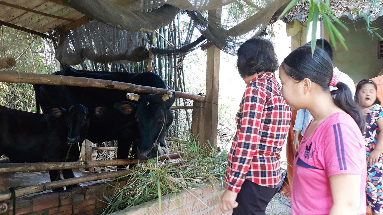 Nhằm hỗ trợ hộ nghèo phát triển kinh tế, chi bộ vận động mạnh thường quân 3 con bò, luân phiên trao cho các hộ