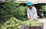Tiền Giang: Nông dân chuyên canh thu lãi hơn 1 tỉ đồng mỗi năm