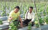 Đức Hòa: Phát triển nông nghiệp ứng dụng công nghệ cao còn nhiều khó khăn
