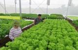 Sản xuất nông nghiệp ứng dụng công nghệ cao - Thiếu vốn và khó về đầu ra