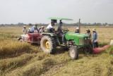 Vụ lúa Hè Thu 2018: Kỳ vọng được mùa, trúng giá